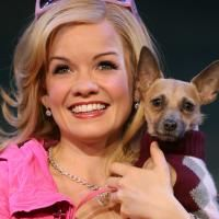 Legally Blonde National Tour Comes To OCPAC 9/8, Tickets On Sale 7/10
