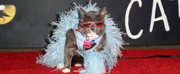 Photos: On The Opening Night Red Carpet of CATS at the Pantages