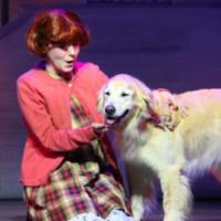 Photo Flash: ANNIE Shines At Broadway Palm Photos
