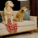 VIDEO: Watch Kristen Bell Interview Netflix's Pet Stars for National Pet Day Photo