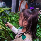 Live Butterflies Return To AMNH On October 6 Photo