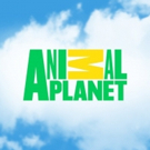Animal Planet Delivers Double-Digit Prime Time Gains Across the 25-54 Demo in February