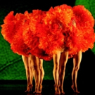 BWW Review: MOMIX Treats Audience to a Night of Confectionary Delights