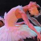 Atlantic City Ballet Brings SWAN LAKE To Napa Valley! Photo