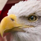 BWW Review: PATRIOTIC POPS at Barbara B. Mann Performing Arts Hall