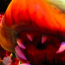 BWW Review: LITTLE SHOP OF HORRORS at Broadway Palm