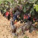 Photo Coverage: TINTO FIGUERO Wines from Spain Delight Wine Aficionados and Many More Photos