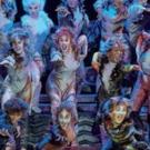 BWW Review: CATS at Palais 12