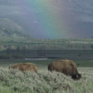 Smithsonian Channel To Debut EPIC YELLOWSTONE With Bill Pullman