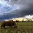 NATURE: THE LAST RHINO The Premiere On PBS 2/21