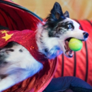 Stunt Dog Experience Comes To Poway Photo