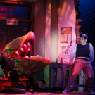 BWW Review: LITTLE SHOP OF HORRORS at Broadway Palm is Delightfully Devious!