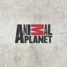 Discovery Communications Expands Animal Planet With New Global Leadership
