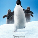 Celebrate First Day of Winter with the New Poster for Disneynature's PENGUINS