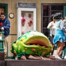 BWW Review: BroadHollow Theatre Company's LITTLE SHOP OF HORRORS