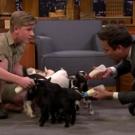 VIDEO: Robert Irwin and Jimmy Fallon Feed Baby Pygmy Goats Video