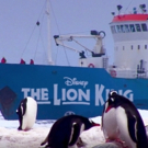 April 1 - THE LION KING Will Become First Musical to Play Seven Continents- Antarctic Video