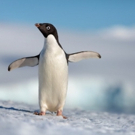 VIDEO: Watch the Trailer for Disneynature's Upcoming Feature PENGUINS