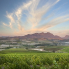 SIMONSIG WINES and Asian Flavors-Perfect Together Photos