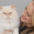VIDEO: Broadway's CATS Supports Shelter Felines, Pet Adoption in New Campaign Photo