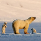 Smithsonian Channel Presents Special MY JOURNEY WITH A POLAR BEAR