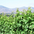 Photo Coverage: 9 LIVES Wine from Chile is Delightful and Approachable