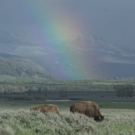 The Smithsonian Channel and Bill Pullman Present EPIC YELLOWSTONE