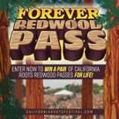 The California Roots Music and Arts Festival Announces the Forever Redwoods Contest