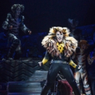 Service Dog Runs Amok During CATS Opening Number! Photo