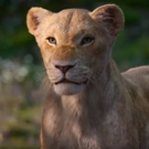 VIDEO: Hear Beyonce as Nala in the New Trailer for THE LION KING Photo