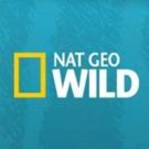 Nat Geo WILD Roars into 2018 with Seven New & Returning Series Photo