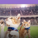 Rescue Pet Adoption Event KITTEN BOWL V Heading to Super Bowl LII