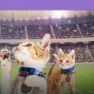 Rescue Pet Adoption Event KITTEN BOWL V Heading to Super Bowl LII