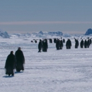 VIDEO: Sneak Peek - Hul Premieres Documentary MARCH OF THE PENGUINS 2: THE NEXT STEP
