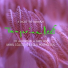 VIDEO: Animal Collective Share Extended Trailer for 'Tangerine Reef', Out 8/17 Photo