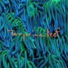 Animal Collective Releases New Album TANGERINE REEF