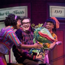 BWW Review: Two Green Thumbs Up for the Stratford Festival's LITTLE SHOP OF HORRORS