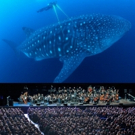 The City of Prague Philharmonic Orchestra to Provide Live Accompaniment to BLUE PLANET II - LIVE IN CONCERT
