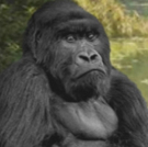 Emerging Artists Theatre presents APES AT PLAY by Jonathan Yukich