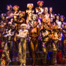 BWW Review: CATS at SHEA'S BUFFALO Theatre Photo