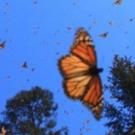FLIGHT OF THE BUTTERFLIES Soars Back On Screen, 11/2 Photo
