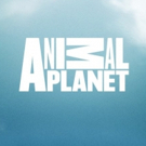 NORTH WOODS LAW Returns to Animal Planet for an All-New Season from New Hampshire on an All-New Night on 2/19