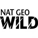 National Geographic WILD and Sun Valley Film Festival Launch Sixth Annual WILD Photo