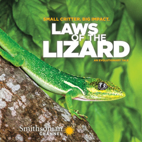 Smithsonian Channel to Premiere LAWS OF THE LIZARD