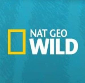 Nat Geo WILD's Big Cat Week Returns This December