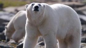 Smithsonian Channel's POLAR BEAR TOWN Season 2 Premieres 11/22/17