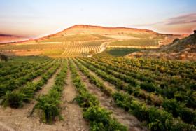 BODEGAS RAMON BALBOA-Fine Spanish Wines