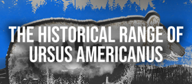 Columbia University School of the Arts Presents THE HISTORICAL RANGE OF URSUS AMERICANUS