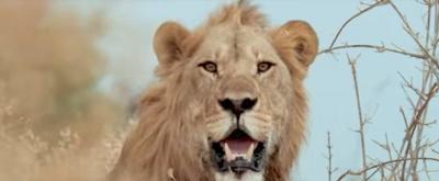 VIDEO: Sneak Peek - Nat Geo WILD's SAVAGE KINGDOM: UPRISING Returns 11/24
