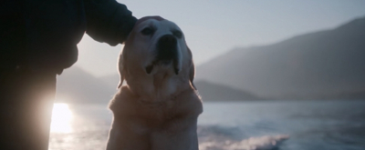 VIDEO: Watch the Official Trailer for Netflix Documentary Series DOGS